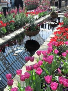 Pretty tulips.