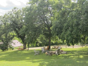 The picnic area~