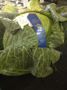 This is what a first place cabbage looks like.