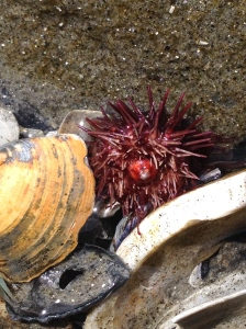 Love this sea urchin!