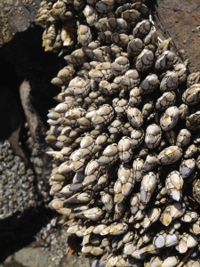 Look at all those barnacles!