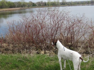 Bird watcher~