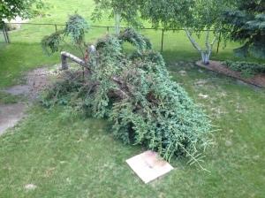 Goodbye ugly pine!