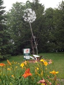 Making a Wish~16 foot dandelion puff