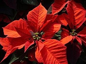 Beautiful bright red flower.