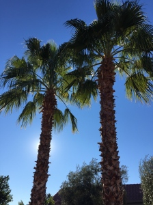 Their palm trees have gotten so big!