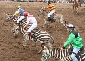 Go zebras go!