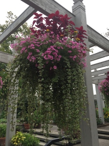 Beautiful hanging baskets in the herb gardens.