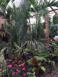 Reminded me of the Como Conservatory on a much smaller scale.