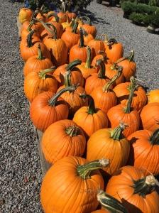 Love the oranges of autumn.