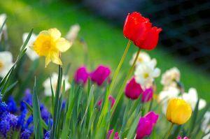 1024px-Colorful_spring_garden
